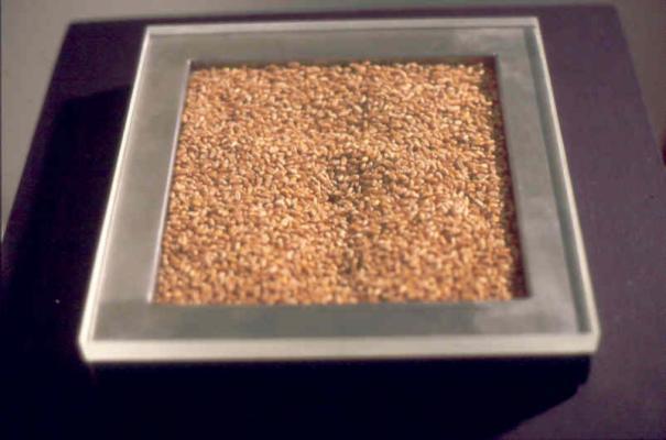 Jean-Lucien Guillaume : MODUL'ART® 25 cm2 de blé
